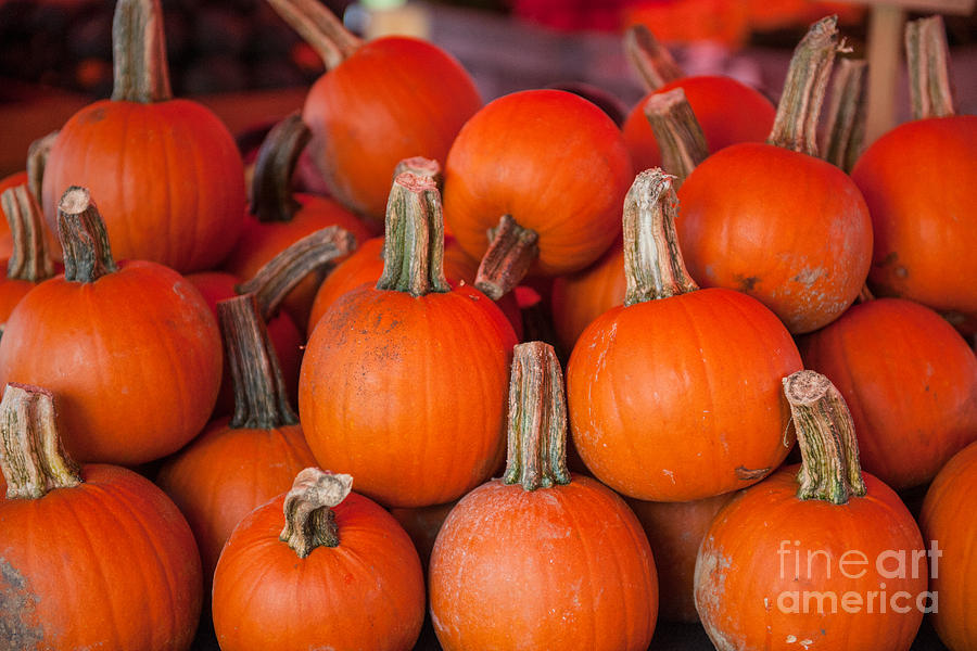 Autumn Pumpkins Photograph
