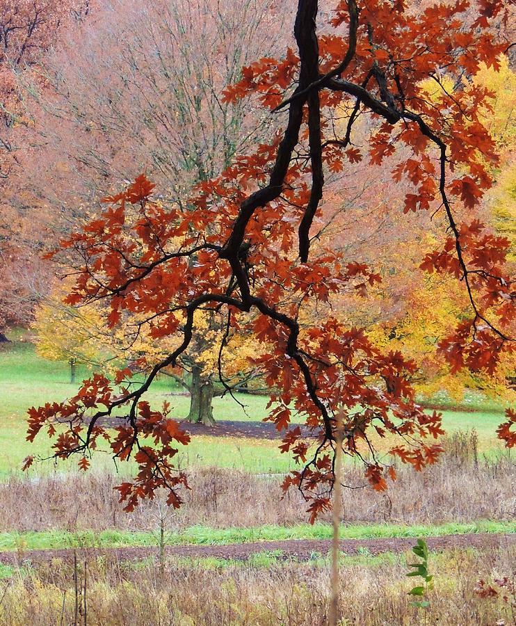 Beautiful Fall Colors Photograph - Autumn Rainbow by Todd Sherlock