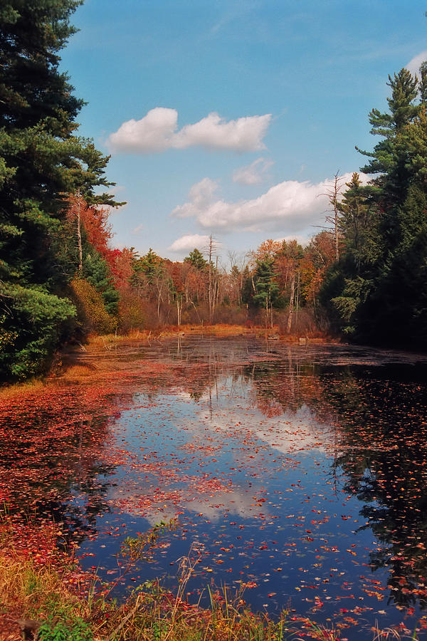Autumn Photograph - Autumn Reflections by Joann Vitali