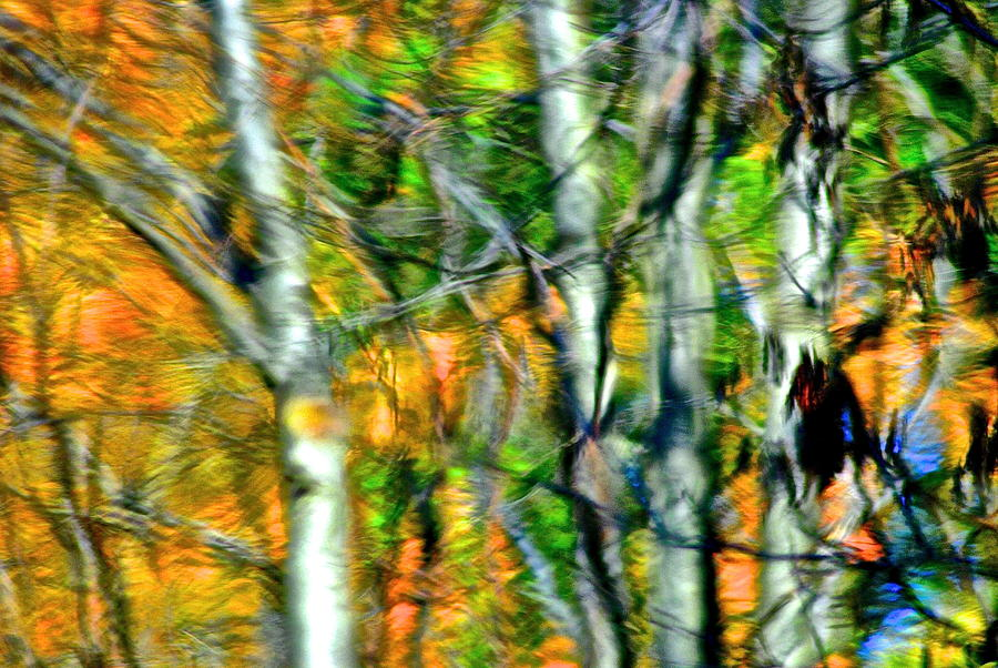 Autumn Reverberates Photograph  - Autumn Reverberates Fine Art Print