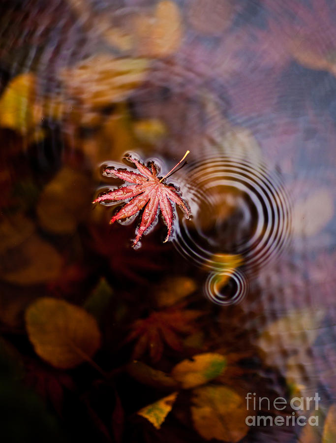 Fall Photograph - Autumn Ripples by Mike Reid