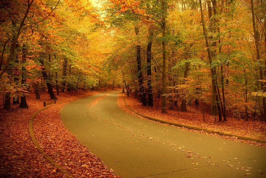 Autumn Serenity - Holmdel Park  Photograph