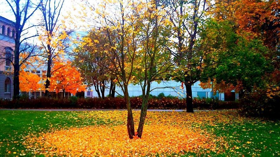 Stockholm University Photograph - Autumn Series 1.1 by Derya  Aktas