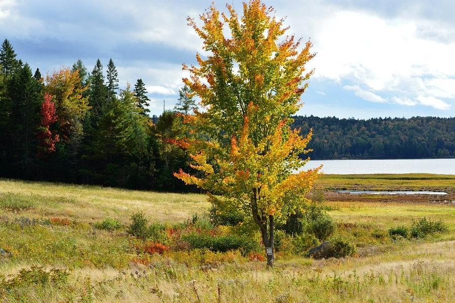 Autumn Shores Of Maine Photograph
