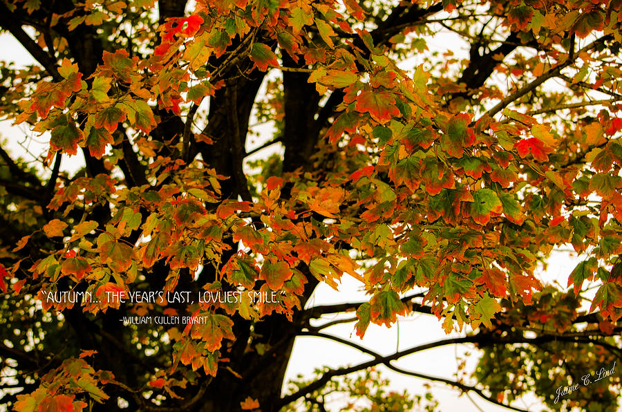 Autumn Smile Photograph  - Autumn Smile Fine Art Print