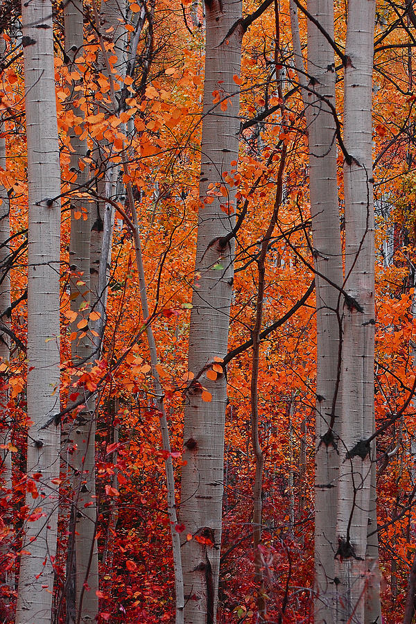 Autumn Splendor Photograph  - Autumn Splendor Fine Art Print