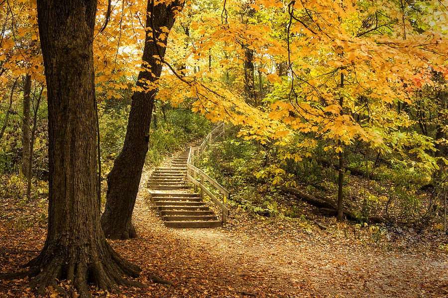 Autumn Stairs Photograph  - Autumn Stairs Fine Art Print