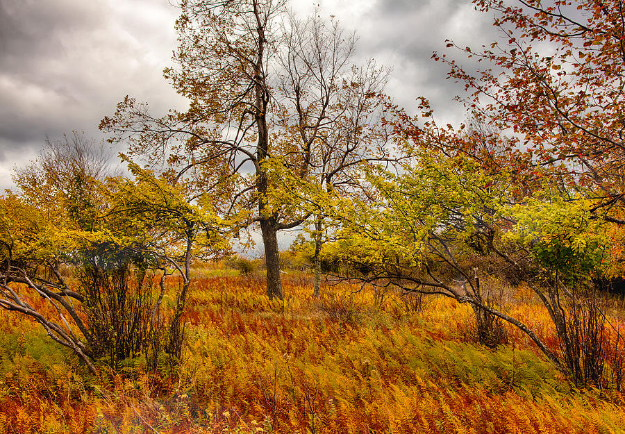 Autumn Storm At Dolly Sods West Virginia I Photograph