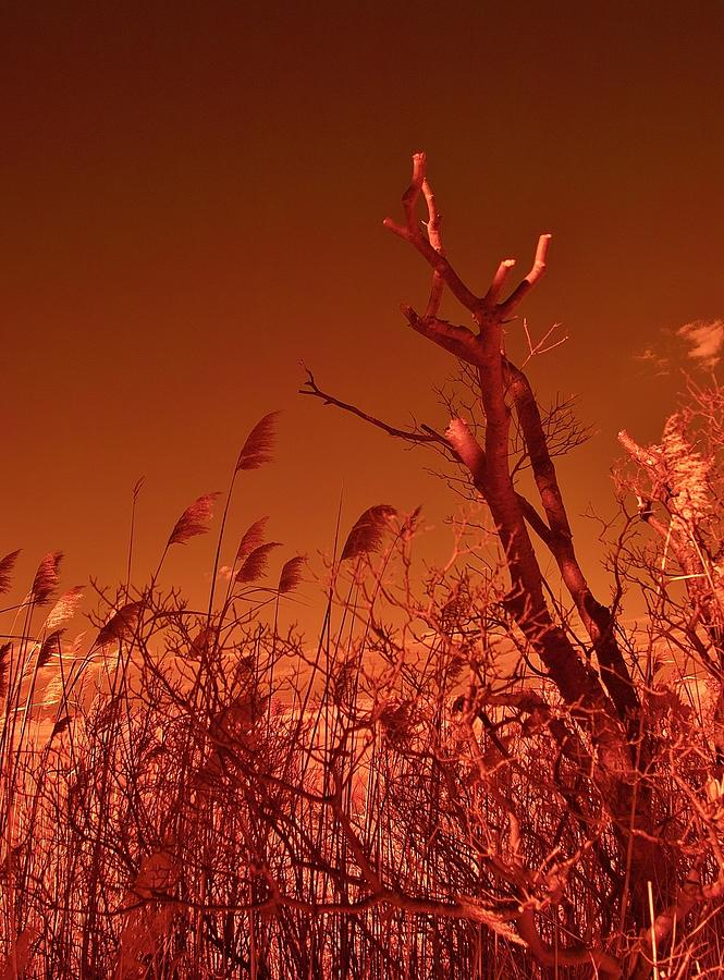 Infrared Photograph - Autumn Surprise  by Thomas  MacPherson Jr