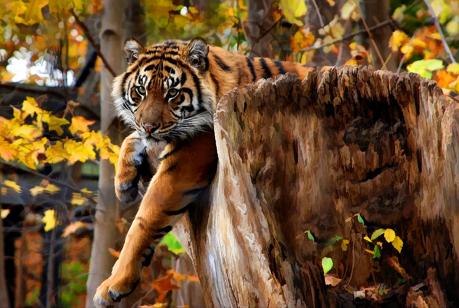 http://images.fineartamerica.com/images-medium-large-5/autumn-tiger-elaine-manley.jpg