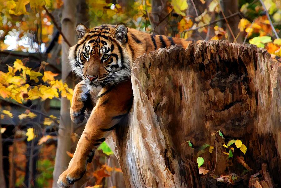 http://images.fineartamerica.com/images-medium-large-5/autumn-tiger-elaine-manley.jpg