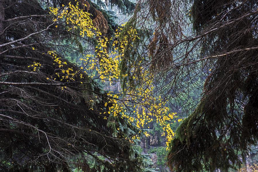 Autumn Trees2 Photograph