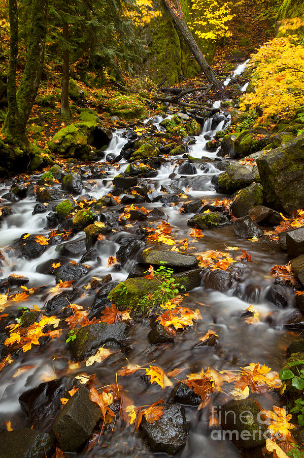 Autumn Tumbles Down Photograph  - Autumn Tumbles Down Fine Art Print
