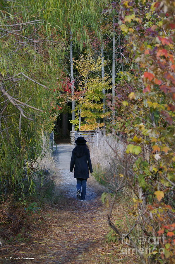 Landscape Photograph - Autumn Walk by Tannis  Baldwin