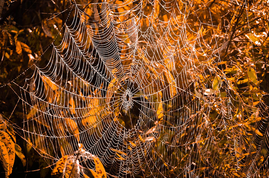Autumn Web Photograph