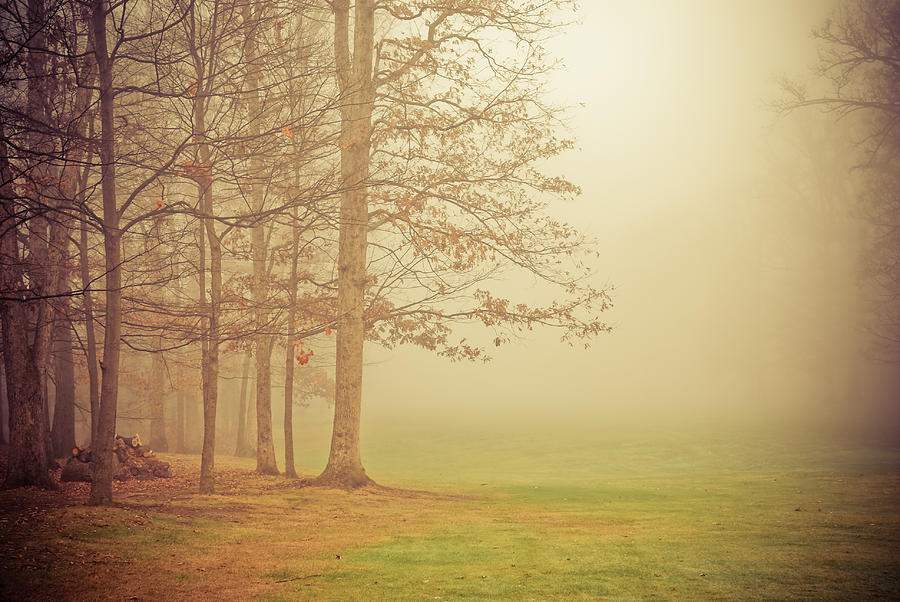 Autumn Whisper Photograph