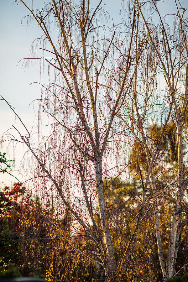 Autumn Wilt Photograph  - Autumn Wilt Fine Art Print
