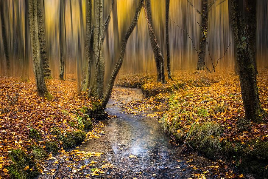 Autumn Woodland Photograph