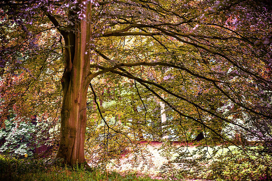 Autumnal Colors In The Summer Time. De Haar Castle Park Photograph  - Autumnal Colors In The Summer Time. De Haar Castle Park Fine Art Print