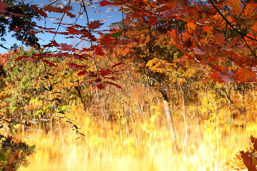 Autumnal Fire Photograph  - Autumnal Fire Fine Art Print