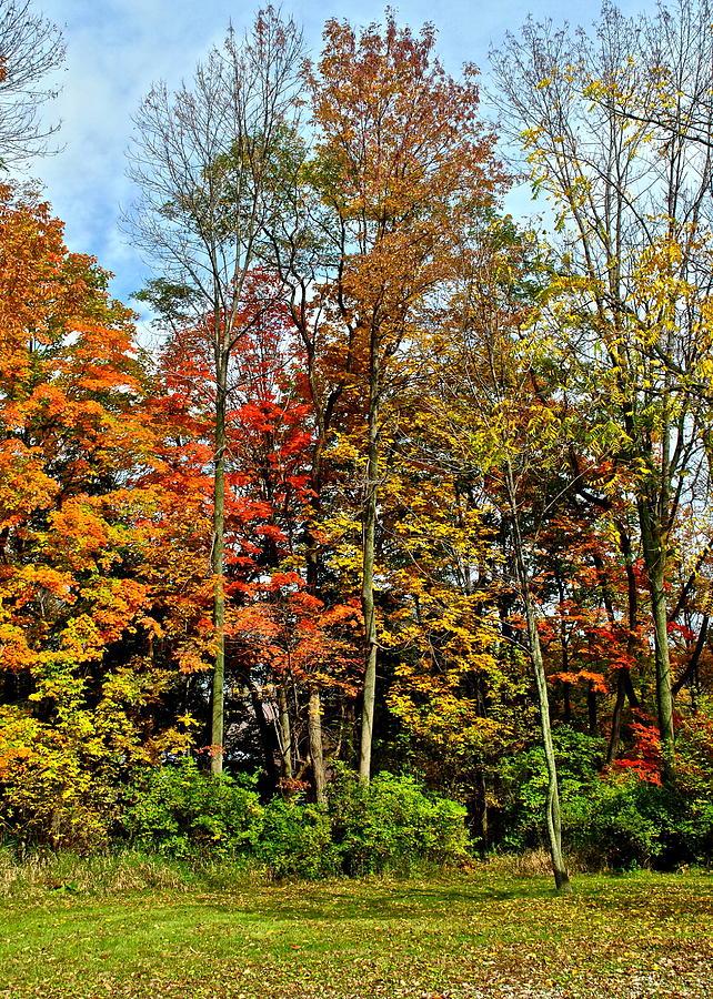 Autumnal Foliage Photograph