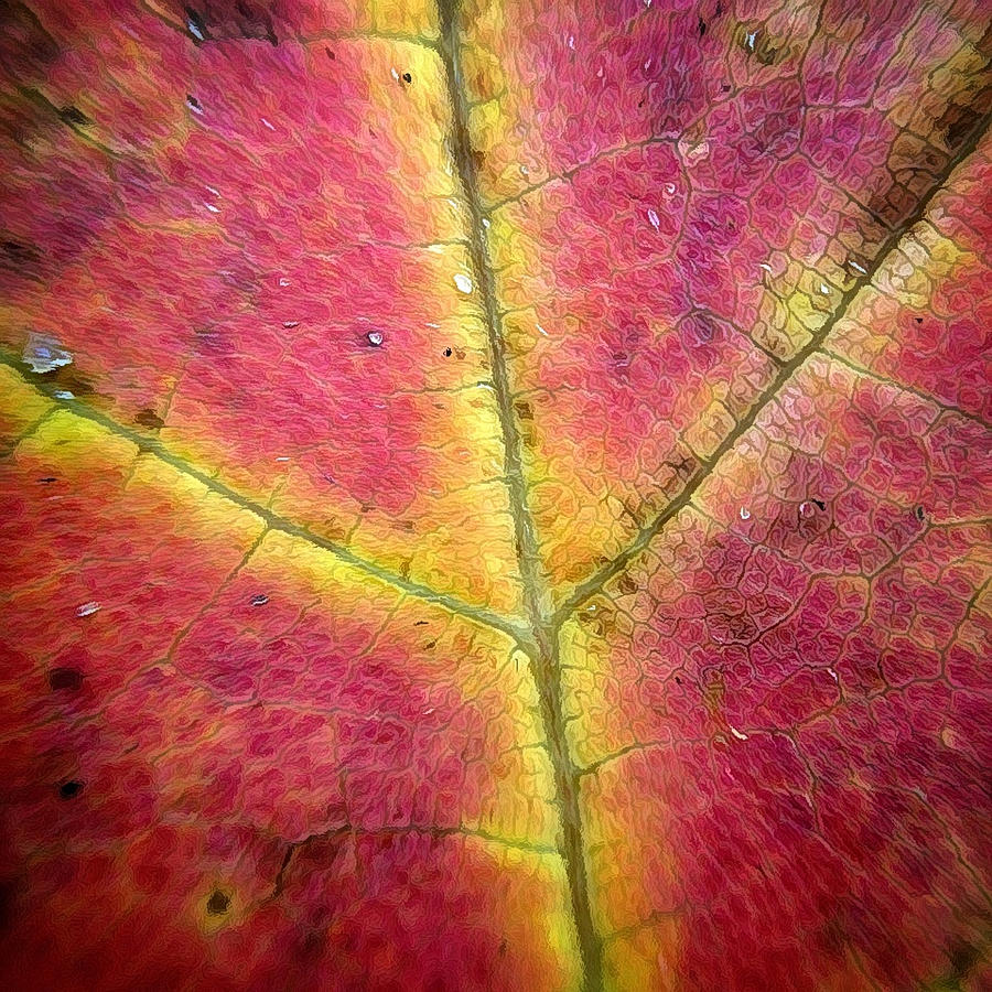 Autumnal Intricacy Photograph