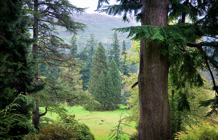Autumnal Trees In Benmore Botanical Garden. Scotland Photograph  - Autumnal Trees In Benmore Botanical Garden. Scotland Fine Art Print