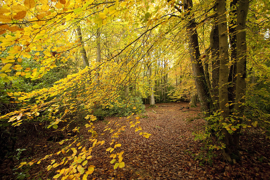 Autumnal Woodland II Photograph
