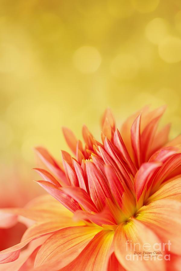 Dahlia Photograph - Autumns Calling Card by Beve Brown-Clark Photography