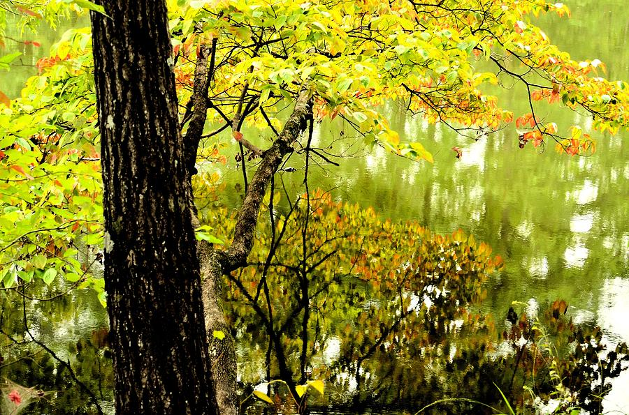 Autumns First Reflections II Photograph  - Autumns First Reflections II Fine Art Print