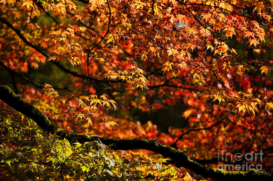 Autumns Glory Photograph  - Autumns Glory Fine Art Print
