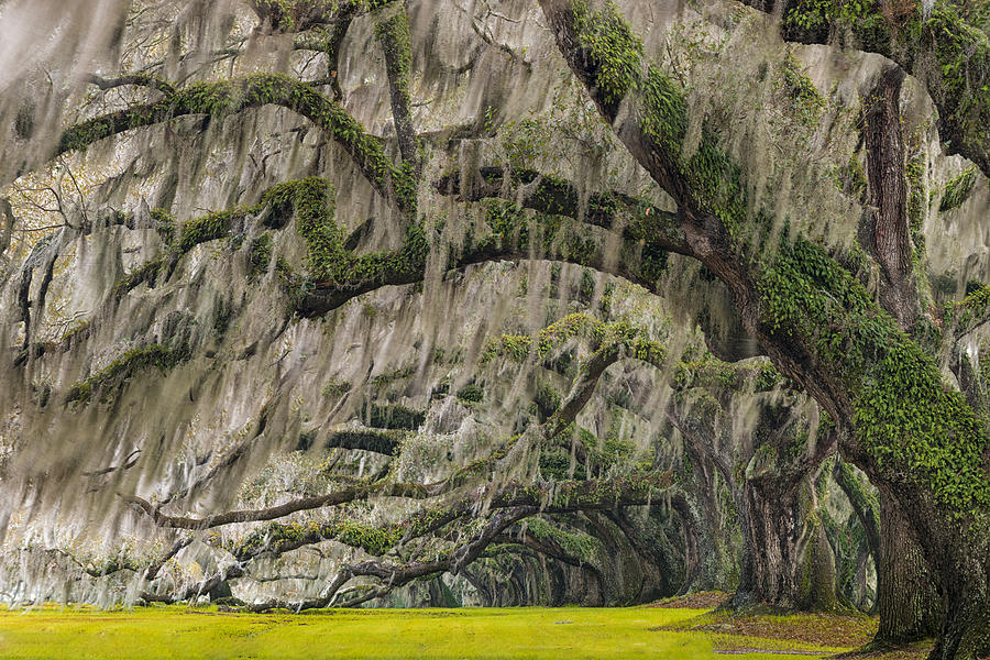 Live Oaks Photograph - Avenue Of Oaks by Joseph Rossbach
