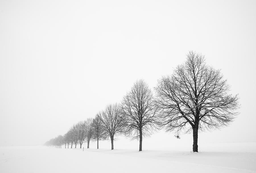 Avenue With Row Of Trees In Winter Photograph  - Avenue With Row Of Trees In Winter Fine Art Print