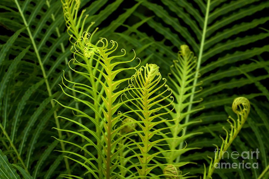 Nature Photograph - Awakening by Julia Hiebaum