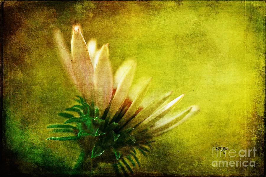 Flower Photograph - Awakening by Lois Bryan