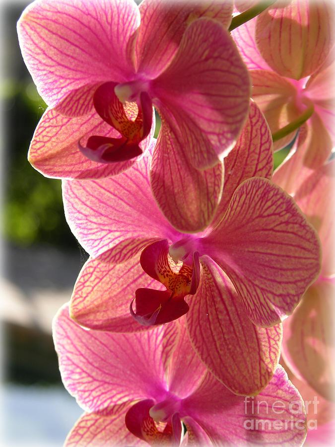 Awakening Orchids Photograph