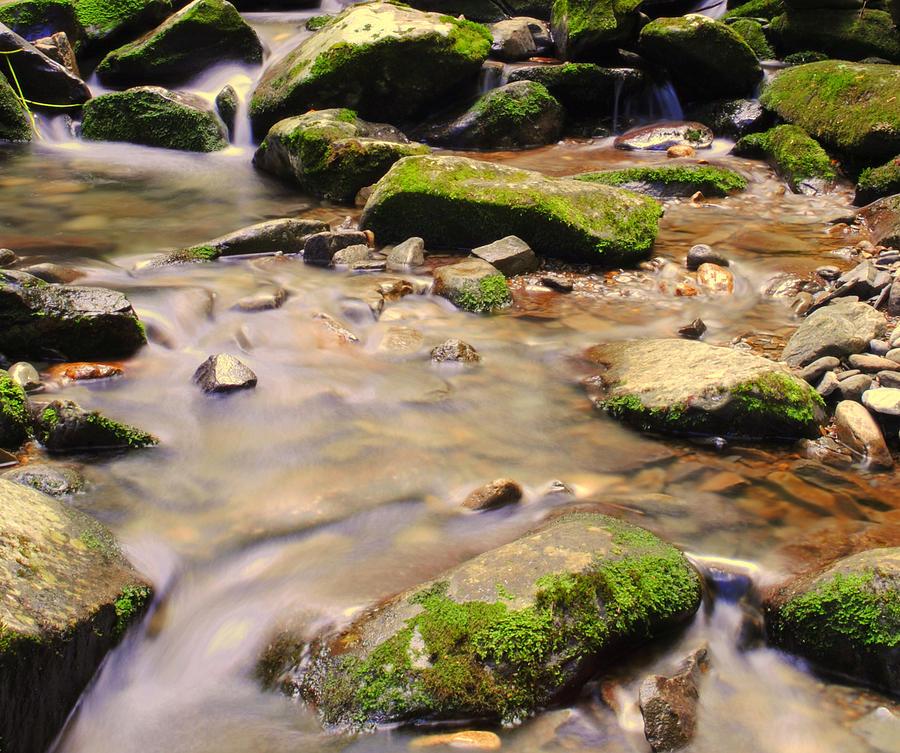 Babbling Brook Photograph