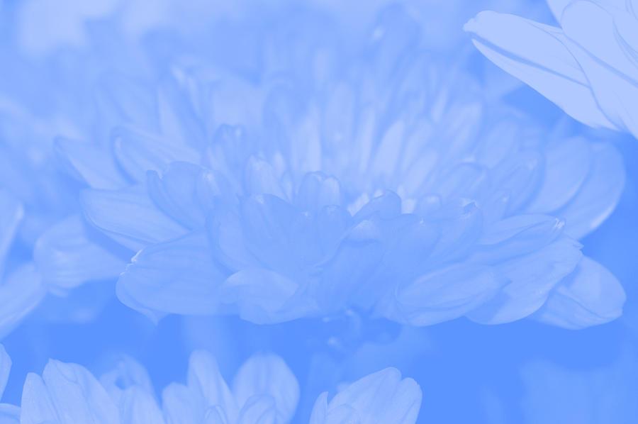 Blue Digital Art - Baby Blue 1 by Carol Lynch