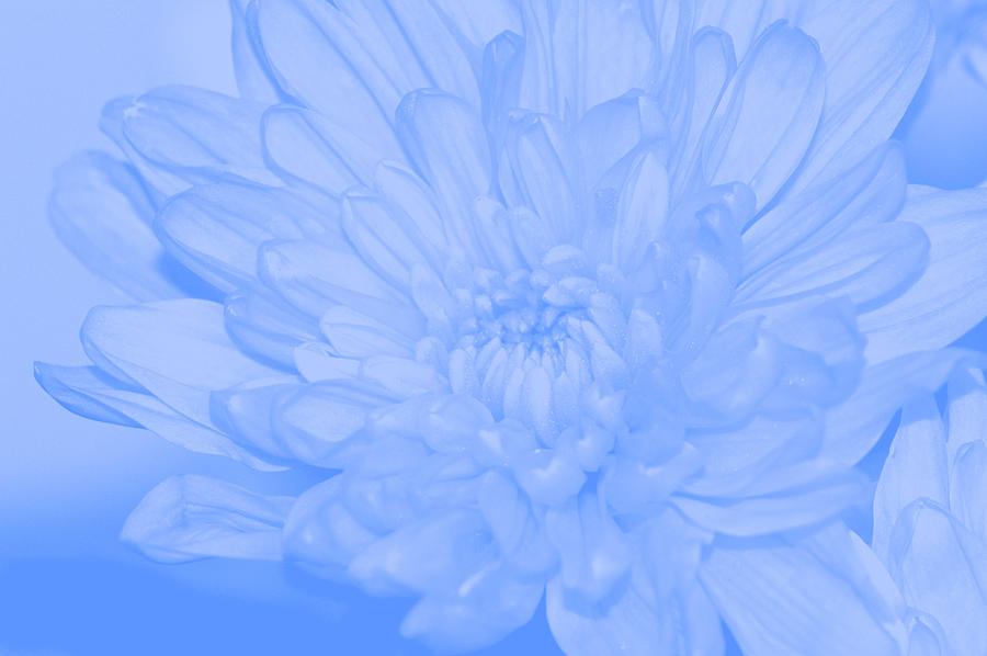 Baby Blue 3 Digital Art  - Baby Blue 3 Fine Art Print