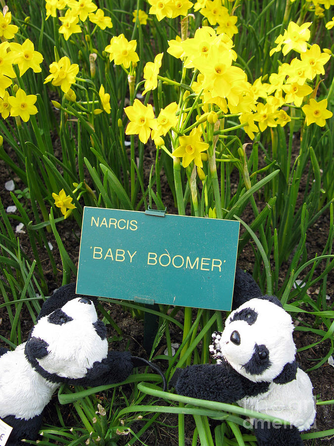 Baby Boomers Photograph