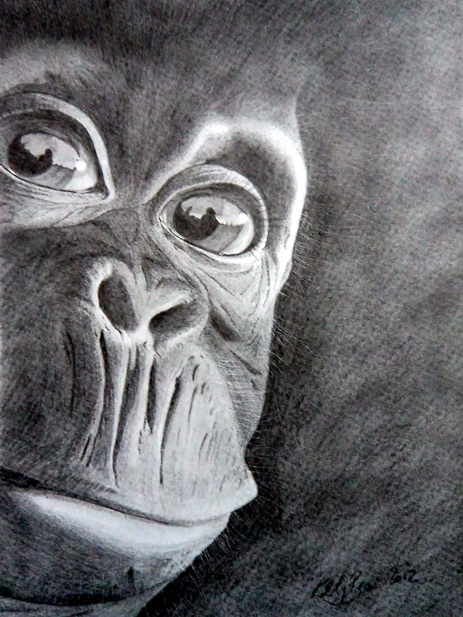 Baby Chimpanzee Drawing by Kelly Brown