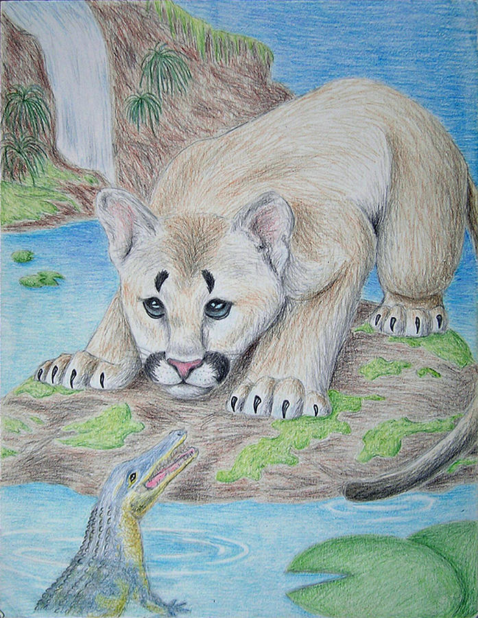 Baby Cougar And Alligator Drawing by Jeanette K