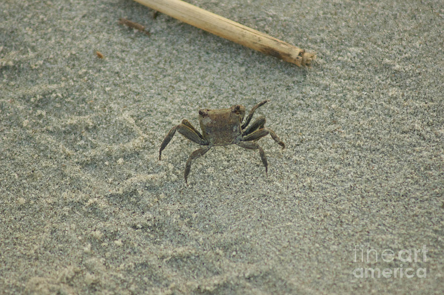 Baby Crab by Matthew L...