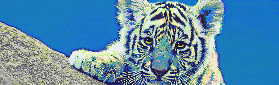 Baby Tiger- Blue Digital Art  - Baby Tiger- Blue Fine Art Print