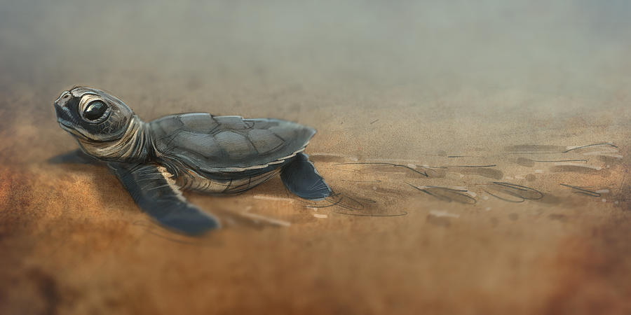 Baby Turtle Digital Art
