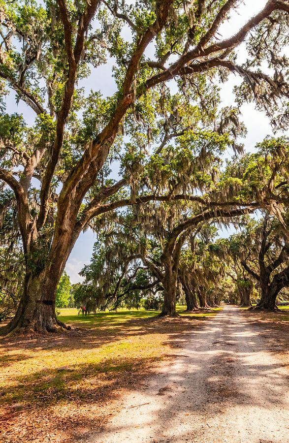 Evergreen Plantation Photograph - Back To The Future by Steve Harrington