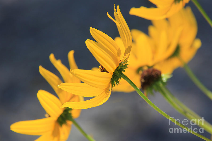 Backlight Illumination Photograph  - Backlight Illumination Fine Art Print