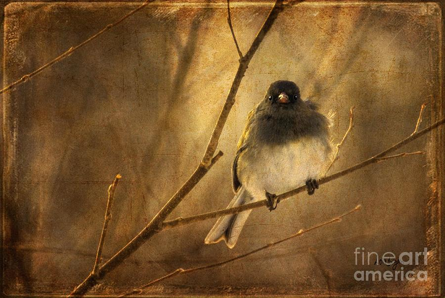 Backlit Birdie Being Buffeted  Photograph  - Backlit Birdie Being Buffeted  Fine Art Print