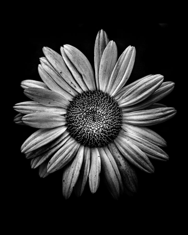 Backyard Flowers In Black And White 13 Photograph