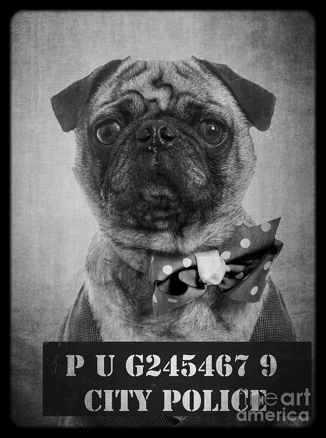 Bad Dog Photograph